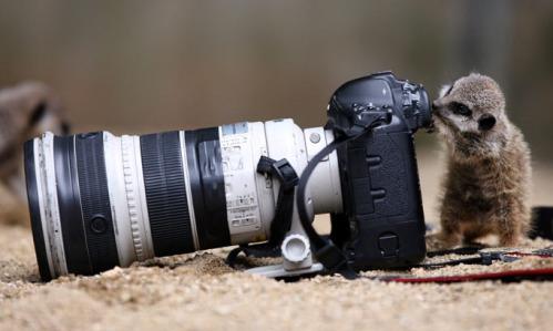 Camera_meerkat