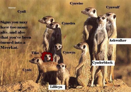 Meerkat_alts